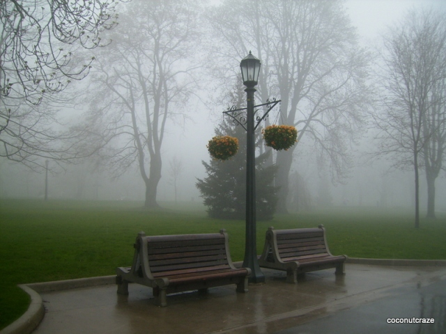 Mist on a Spring day